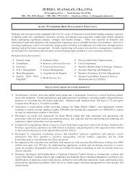 Professional Accountant Resume Example It Auditor Sample Resume
