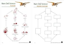 food web worksheets free worksheets library download and print