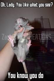 Rat Meme - funny rat balls meme by zachpientacreations on deviantart