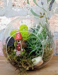 home decoration sample of terrarium plants with black pot 3