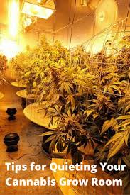 532 best my mission to grow images on pinterest cannabis growing
