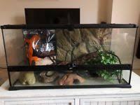 reptile in northern ireland pet equipment u0026 accessories for sale
