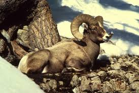 Utah wild animals images Native animals of utah wildlife and habitat animalwised jpg