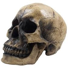 Skull Decorations For The Home Amazon Com Spooky Human Skull Statuette For Scary Figurines And
