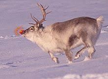 rudolph red nosed reindeer simple english