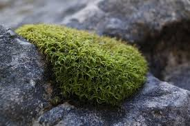 Moss Moss Green Free Pictures On Pixabay