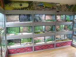 best 25 reptile room ideas on pinterest snake terrarium iguana