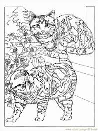 dover publications grumpy cat coloring book grumpy