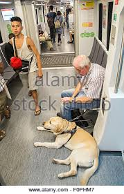 Blind Dog And His Guide Dog Blind Man And His Guide Dog Travelling From Centre Of Barcelona To