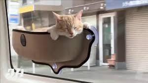 mounted window cat pod cute cats youtube