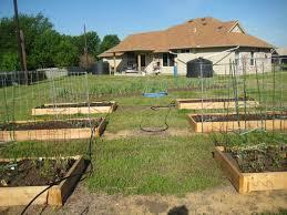 gardening denton organic u0027s blog