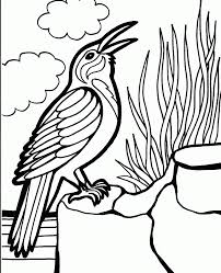 best realistic bird coloring pages for kids womanmate com