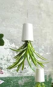 sky planter upside down hanging pots for spider plants