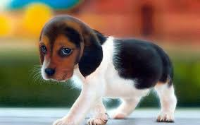 cute dog wallpapers dog wallpapers and pictures for mobile and desktop