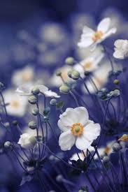 Beautiful Flowers Best 20 Beautiful Flowers Photos Ideas On Pinterest Flower