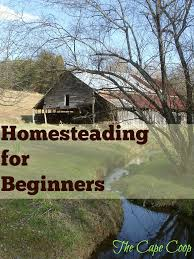 homesteading for beginners the cape coop