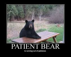 patient bear 02 patient bear bear sitting at table know your meme
