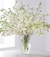white dendrobium luxury 240 00 boca orchids florist orchid