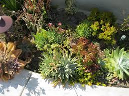 costa mesa native succulent front yard mediterranean landscape