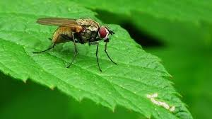 Flies In Backyard Ultimate Tips On How To Get Rid Of Flies Inside And Outside