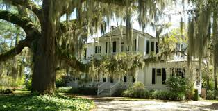 12 things you need to know about spanish moss u2022 beaufort sc best