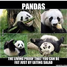 Memes De Pandas - best of 20 memes de pandas wallpaper site wallpaper site