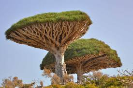 trees are also native plants top 10 iconic african trees earth touch news network
