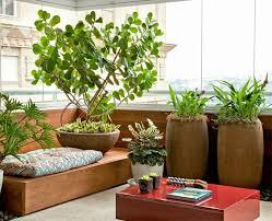 topfpflanzen balkon balkon gestalten pflanzen exotik niedrige bank ideen zuhause