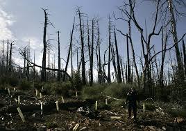 California Wildfire Names by Remembering Cedar Fire U0027s Deadliest Surge The San Diego Union Tribune