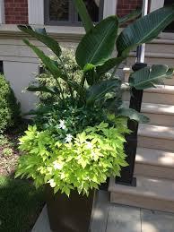 Indoor Garden Containers - 79 best topiarius summer annuals images on pinterest garden
