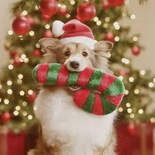 dog christmas santa paws is coming to town london s christmas grotto for