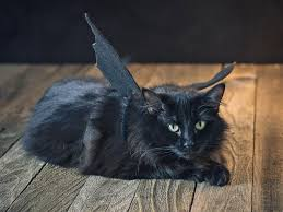 Bat Costumes Halloween Halloween Pet Costume Black Bat Hgtv