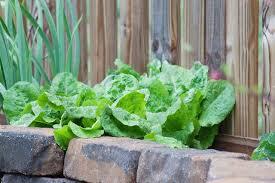 how to start a vegetable garden hunker