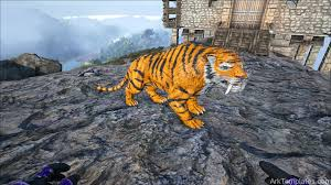 real tiger ark templates