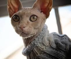 sphynx sweaters sphynx sweater
