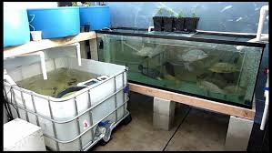 Backyard Fish Farming Tilapia Aquaponics From Portable Farmsa Systems Pictures On Cool Backyard
