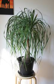 6 houseplants you can totally keep alive houseplants easy and