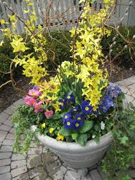 53 best spring containers images on pinterest pots flower