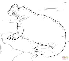 southern elephant seal coloring page free printable coloring pages