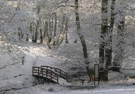 silver trees park rugeley staffordshire caravan sitefinder