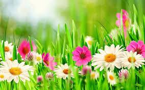spring flowers u2013 happy easter 2017