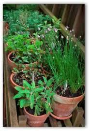 Patio Vegetable Garden Ideas Small Vegetable Garden Design Gardening Ideas