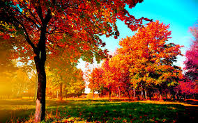 photo collection fall tree wallpaper widescreen