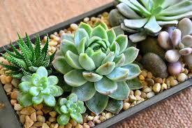 succulent arrangements succulent arrangement ideas succulent arrangement ideas