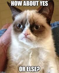 How About Yes Meme - grumpy cat meme imgflip