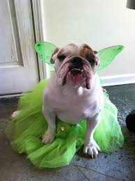 Halloween Costumes English Bulldogs Dog Halloween Costume Dog Costume Dog Tinkerbell Fairy