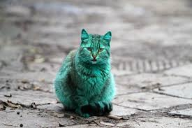 mystery of the turquoise cat what caused this color change