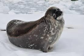 Seal Meme Generator - you wanna talk about it seal meme generator imgflip