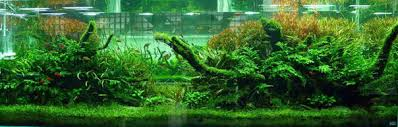 Aquascape Layout Aquascaping Designs Ideas U0026 Layouts