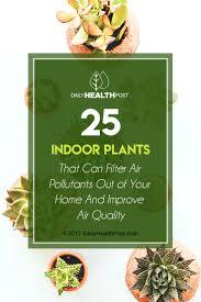 types of indoor plants pilea types of indoor plants or aluminum